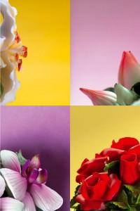 Flores-H
